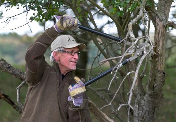Vrijwilliger snoeit struik met takkenschaar