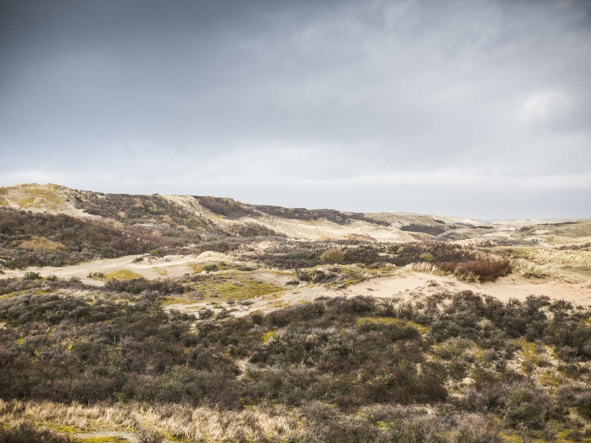 Duinlandschap bij Castricum, Noordhollands Duinreservaat