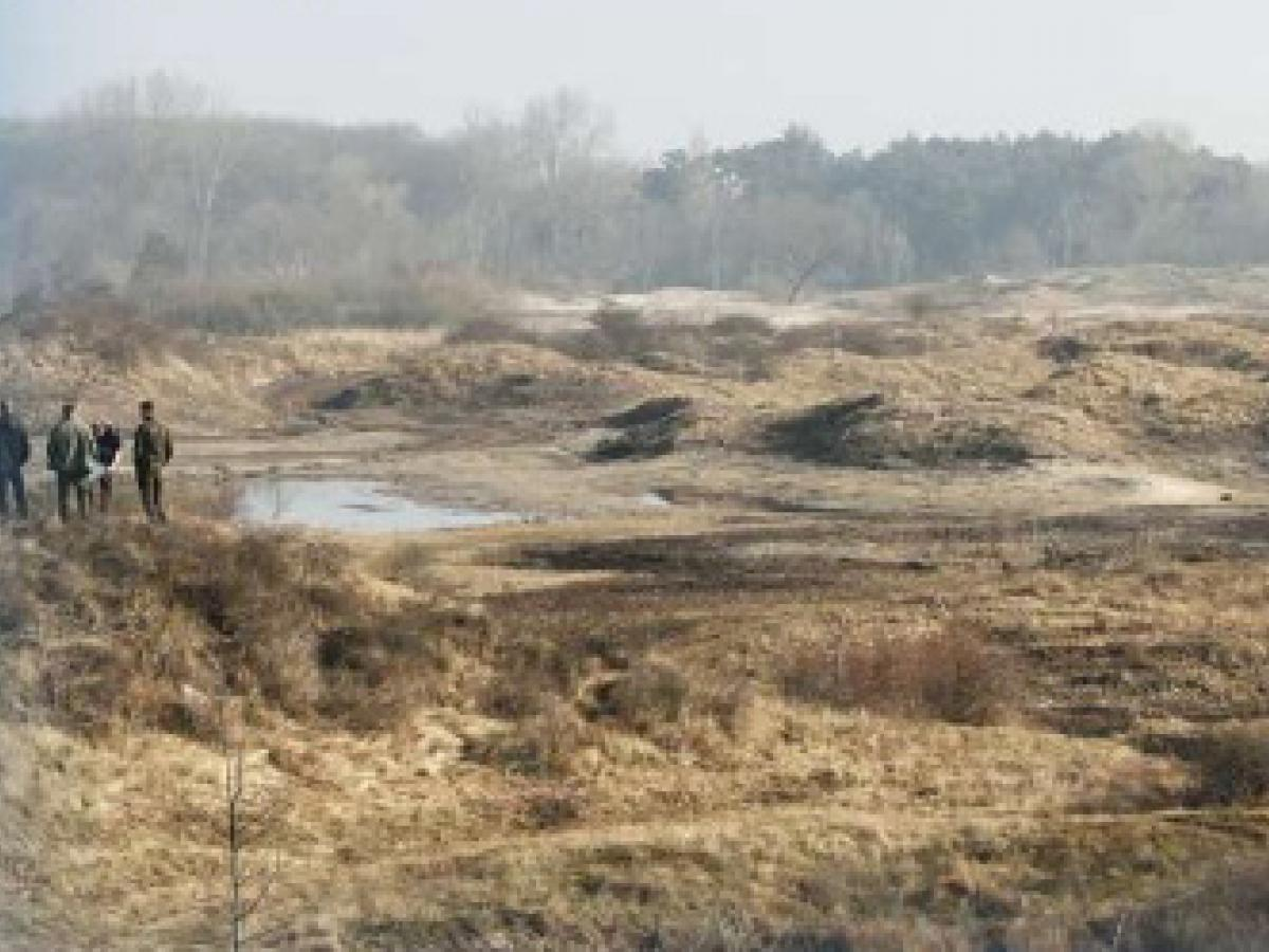 dutch dune revival voorne and goeree
