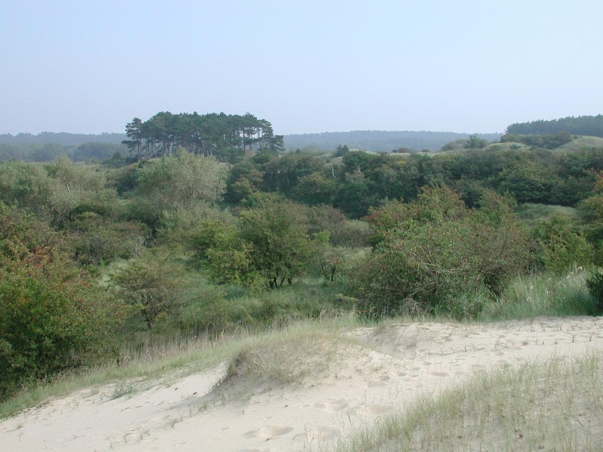 Kraansvlak Nationaal Park Zuid-Kennemerland