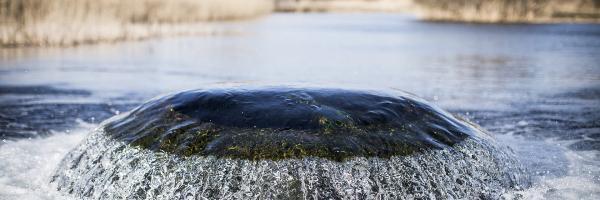 De water inlaat in het infiltratiegebied Castricum