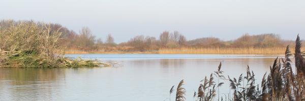 Meer bij infiltratiegebied Castricum. Hier zuiveren wij drinkwater.