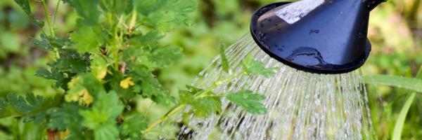 water uit de gieter