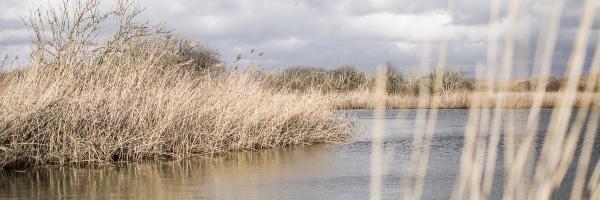 Uitzicht vanuit de vogelkijkhut in Castricum, Noordhollands Duinreservaat