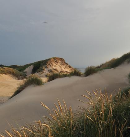 natuurlijke verstuiving duinen PWN