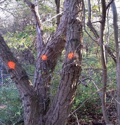 bomen gemerkt met oranje stippen