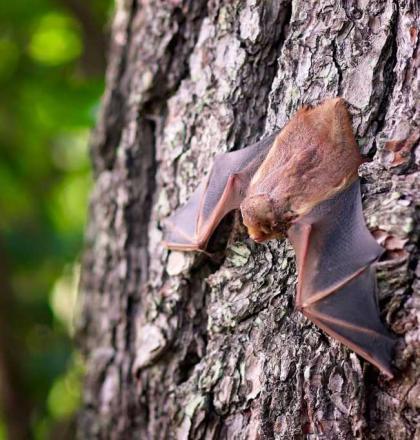 vleermuis op een boom
