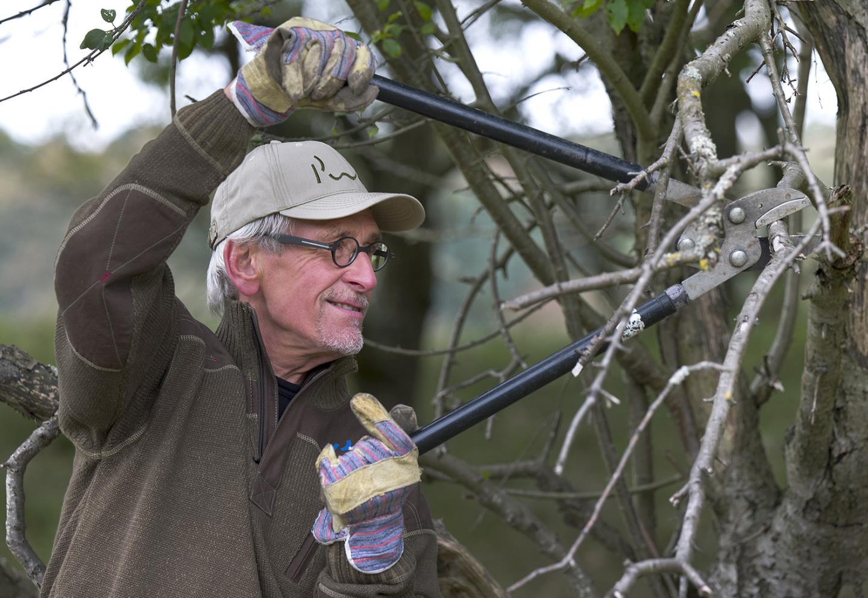 Vrijwilliger helpt PWN bij het duinbeheer