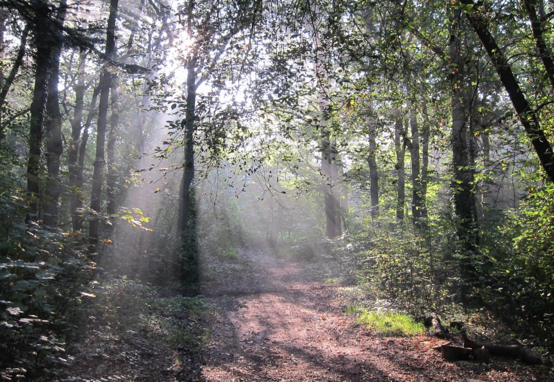 zonnestralen in een bos