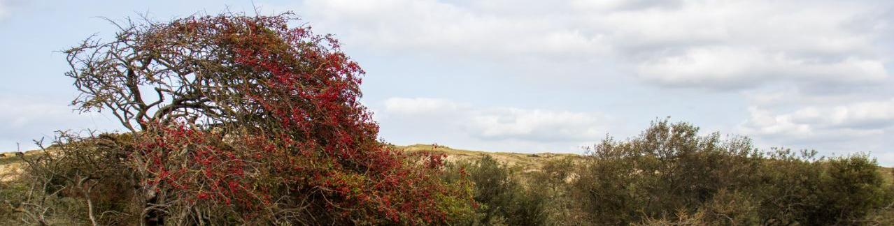 Duinlandschap Egmond aan den Hoef