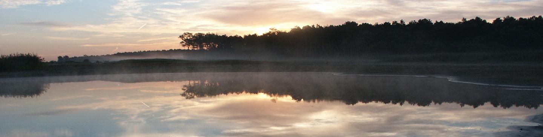 Zicht op de Wei van Brasser Noordhollands Duinreservaat