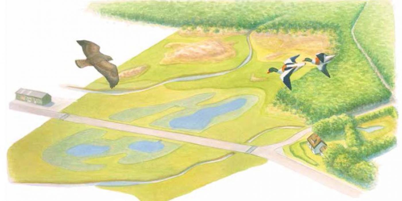 Zanderij in vogelvlucht