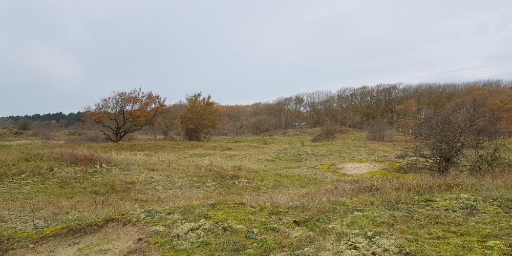 Duinlandschap Melkvlak in het Noordhollands Duinreservaat