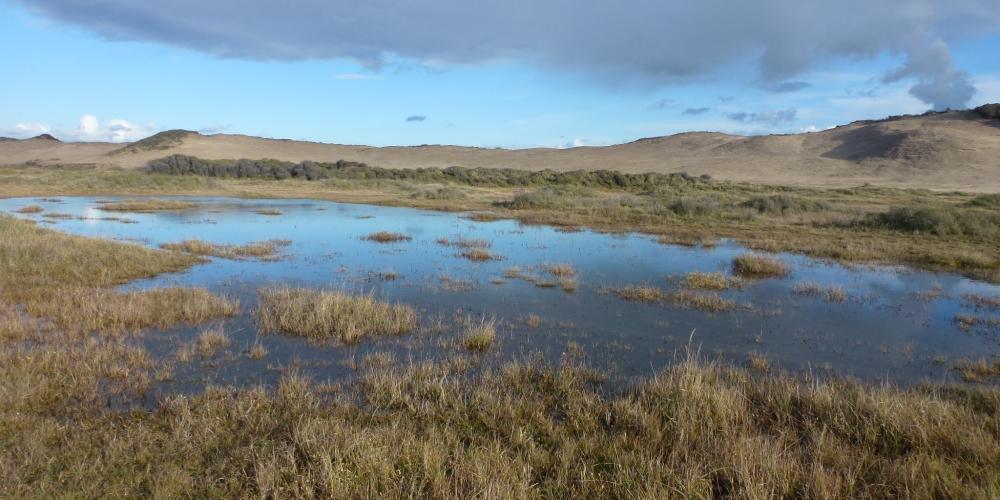 duinen 2012