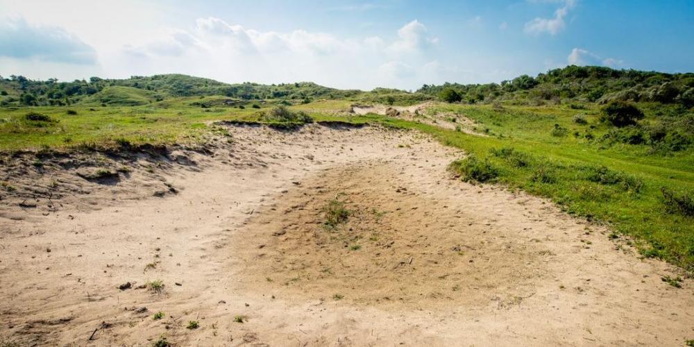 Stuifkuil in het duin, open plek zand