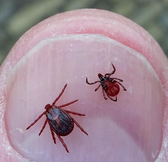 Twee vlekkenteken op nagel